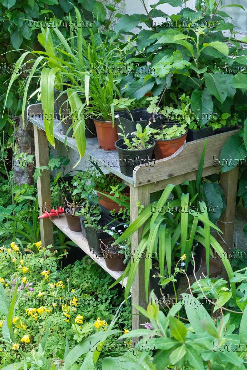 bild arbeitstisch mit pflanzen in blument pfen 557019 bilder und videos von pflanzen und. Black Bedroom Furniture Sets. Home Design Ideas
