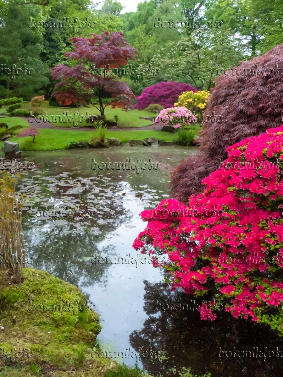 bilder japanische g rten 2 bilder und videos von pflanzen und g rten botanikfoto. Black Bedroom Furniture Sets. Home Design Ideas