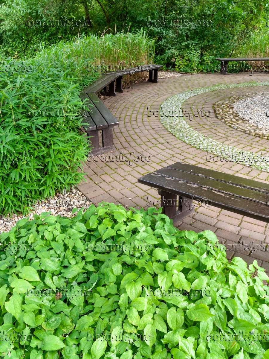bild b nke in einem schattigen garten 463047 bilder und videos von pflanzen und g rten. Black Bedroom Furniture Sets. Home Design Ideas