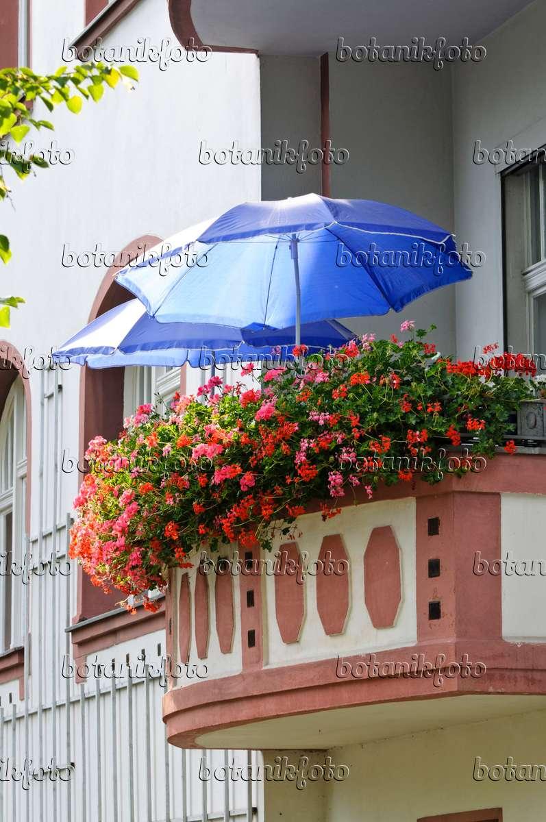 bild balkon mit geranien 475014 bilder und videos von pflanzen und g rten botanikfoto. Black Bedroom Furniture Sets. Home Design Ideas
