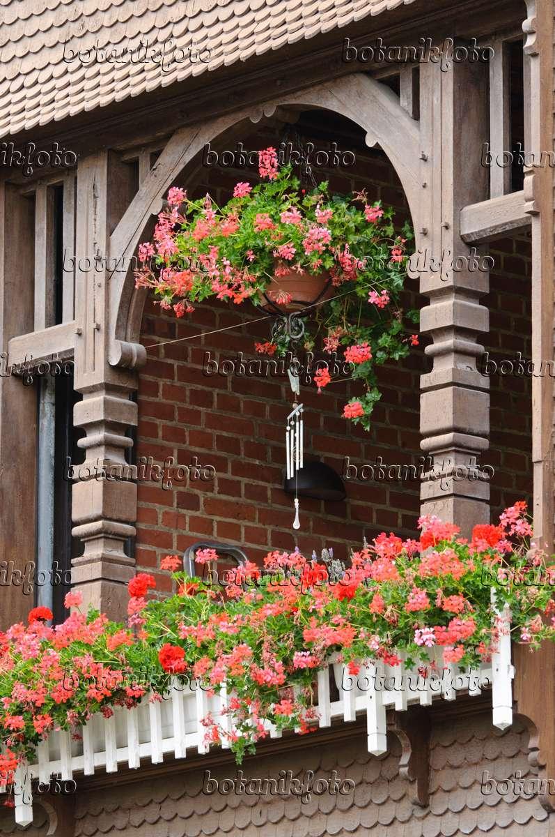 bild balkon mit geranien 475028 bilder und videos von pflanzen und g rten botanikfoto. Black Bedroom Furniture Sets. Home Design Ideas