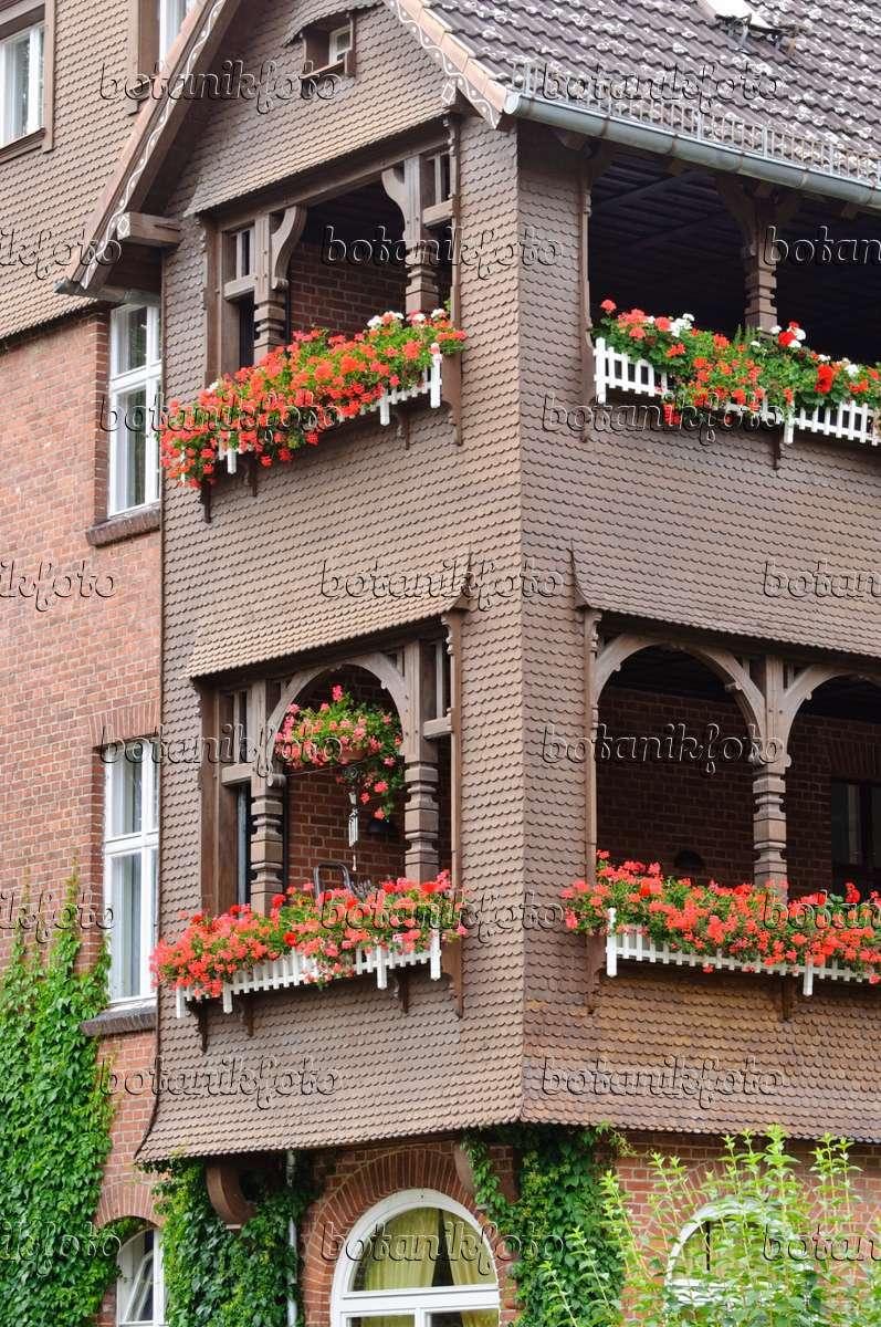 bild balkon mit geranien 475029 bilder und videos von pflanzen und g rten botanikfoto. Black Bedroom Furniture Sets. Home Design Ideas
