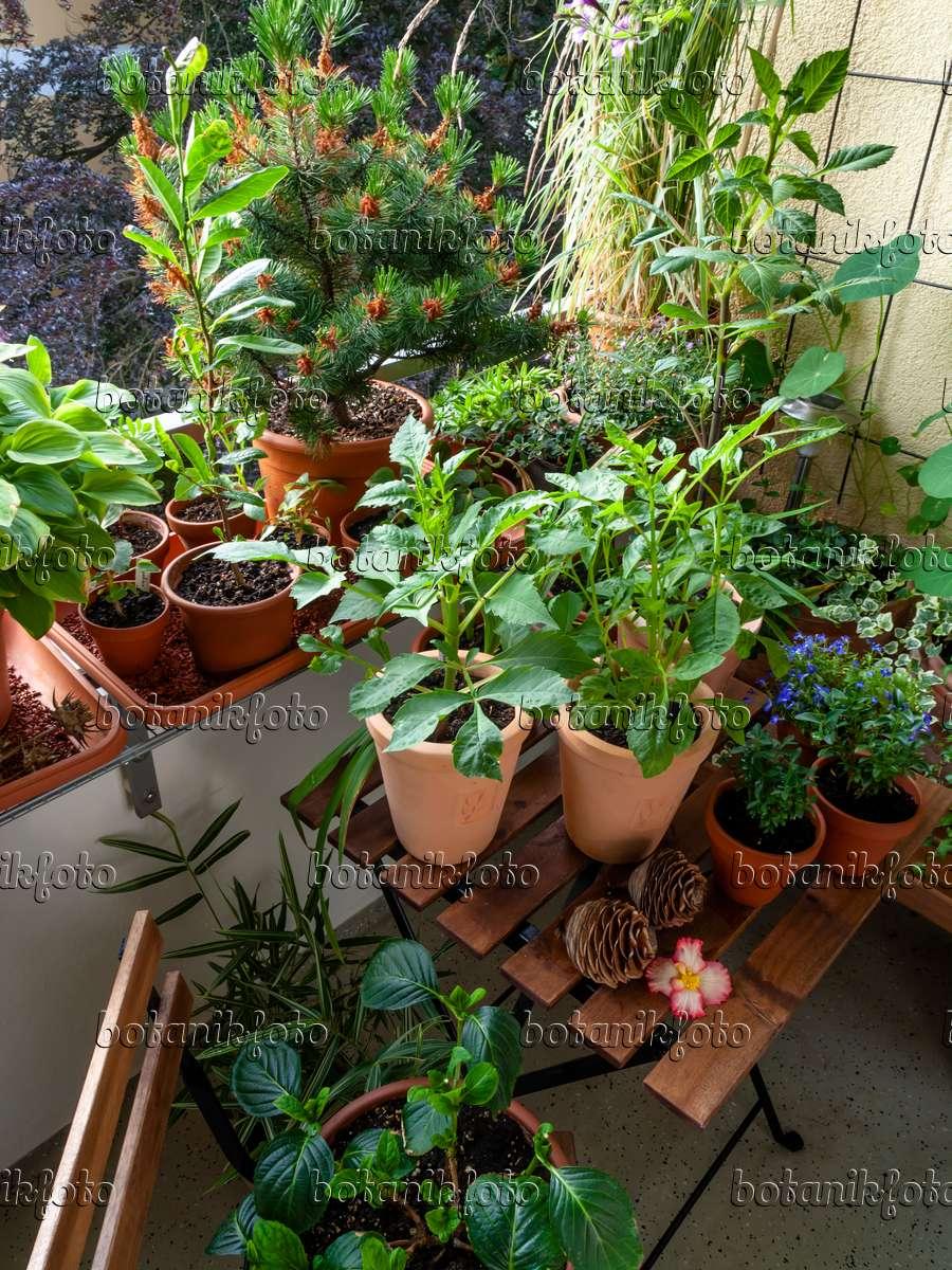 bild balkon mit zahlreichen topfpflanzen 461164 bilder und videos von pflanzen und g rten. Black Bedroom Furniture Sets. Home Design Ideas