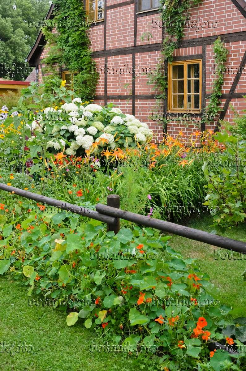 bilder bauerng rten bilder und videos von pflanzen und g rten botanikfoto. Black Bedroom Furniture Sets. Home Design Ideas