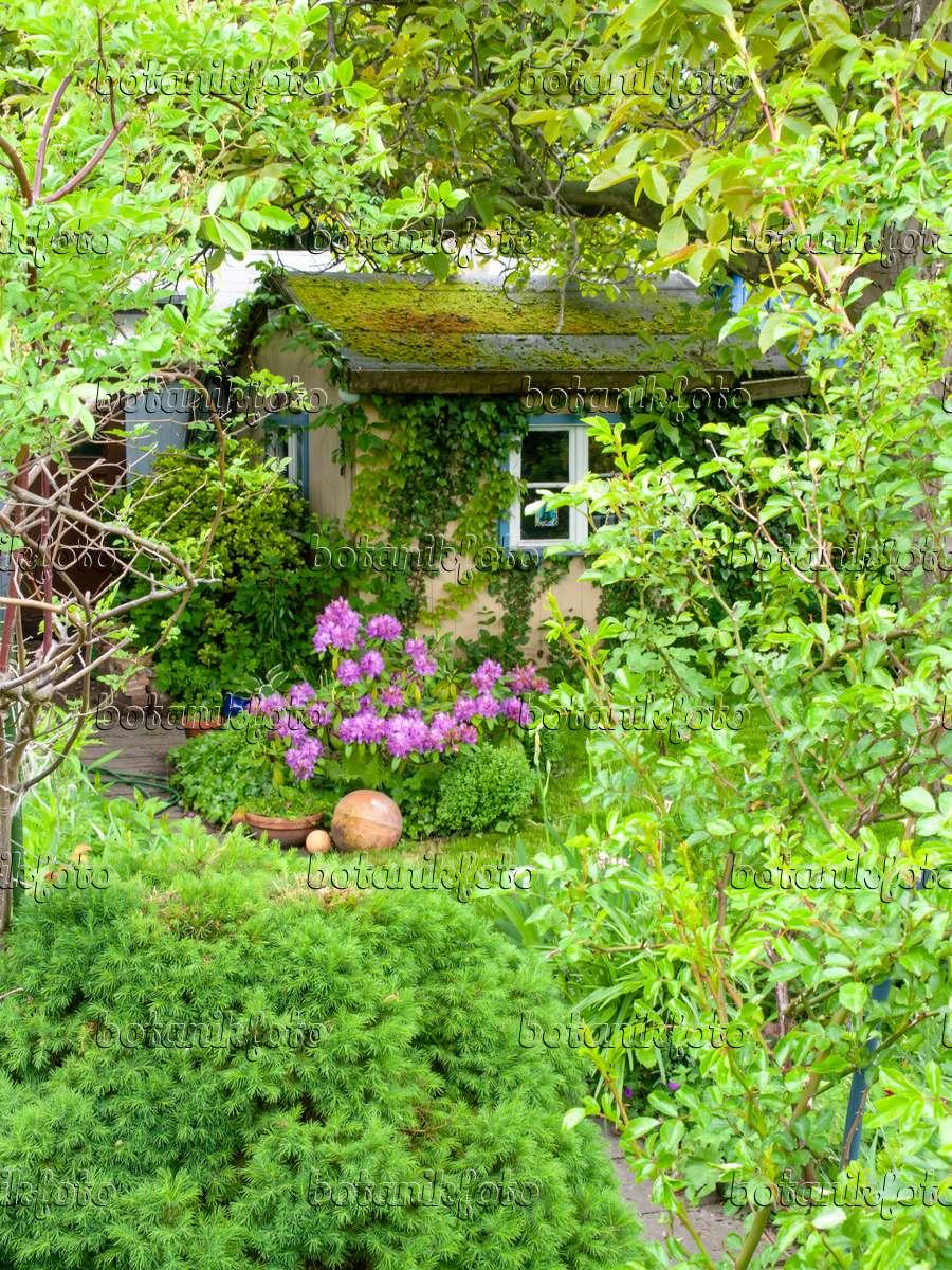Bild Begrünte Gartenlaube In Einem Kleingarten - 484361 - Bilder ... Gartenlaube Pergola Begrunen