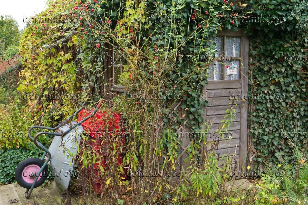 Bild Begrünte Gartenlaube Mit Schubkarre - 538001 - Bilder Und ... Gartenlaube Pergola Begrunen