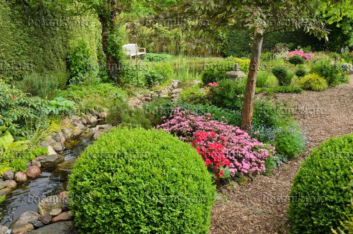bild buchsbaum buxus und azaleen rhododendron an einem. Black Bedroom Furniture Sets. Home Design Ideas