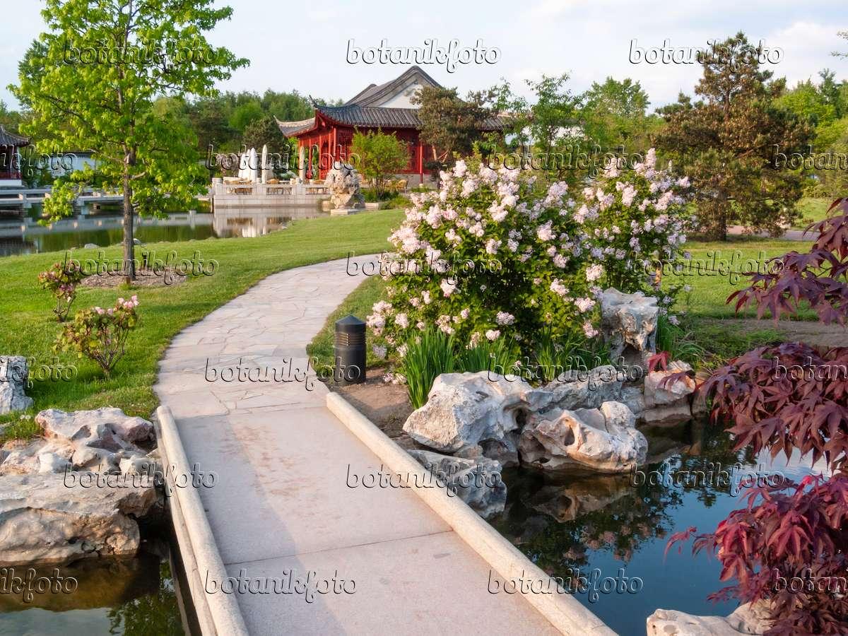 bild chinesischer garten erholungspark marzahn berlin deutschland 401218 bilder und. Black Bedroom Furniture Sets. Home Design Ideas