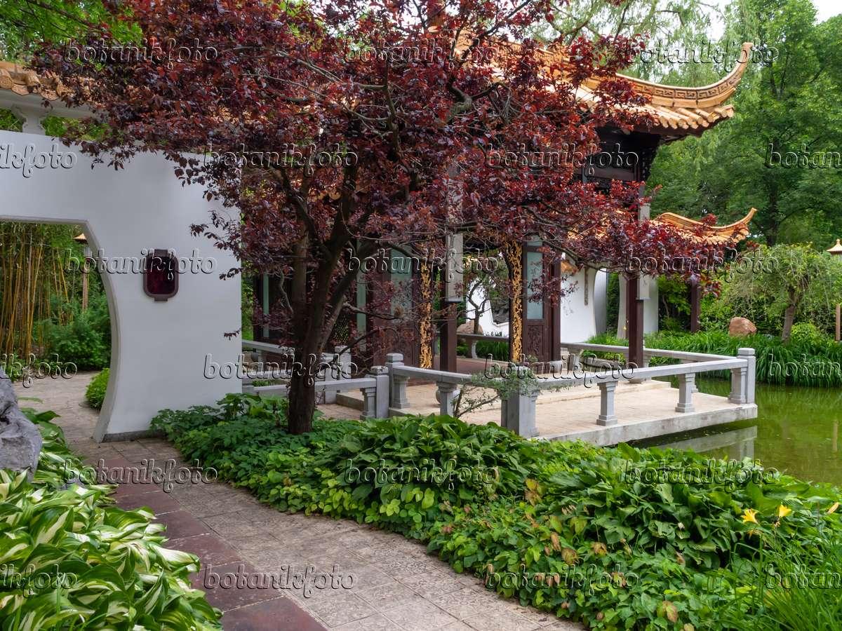 bild chinesischer garten, westpark, münchen, deutschland - 426090, Hause und Garten
