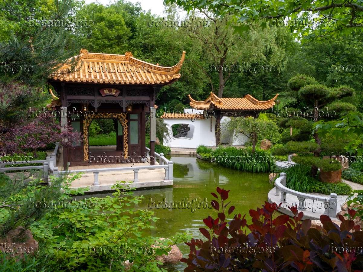 bilder chinesische gärten - bilder und videos von pflanzen und,