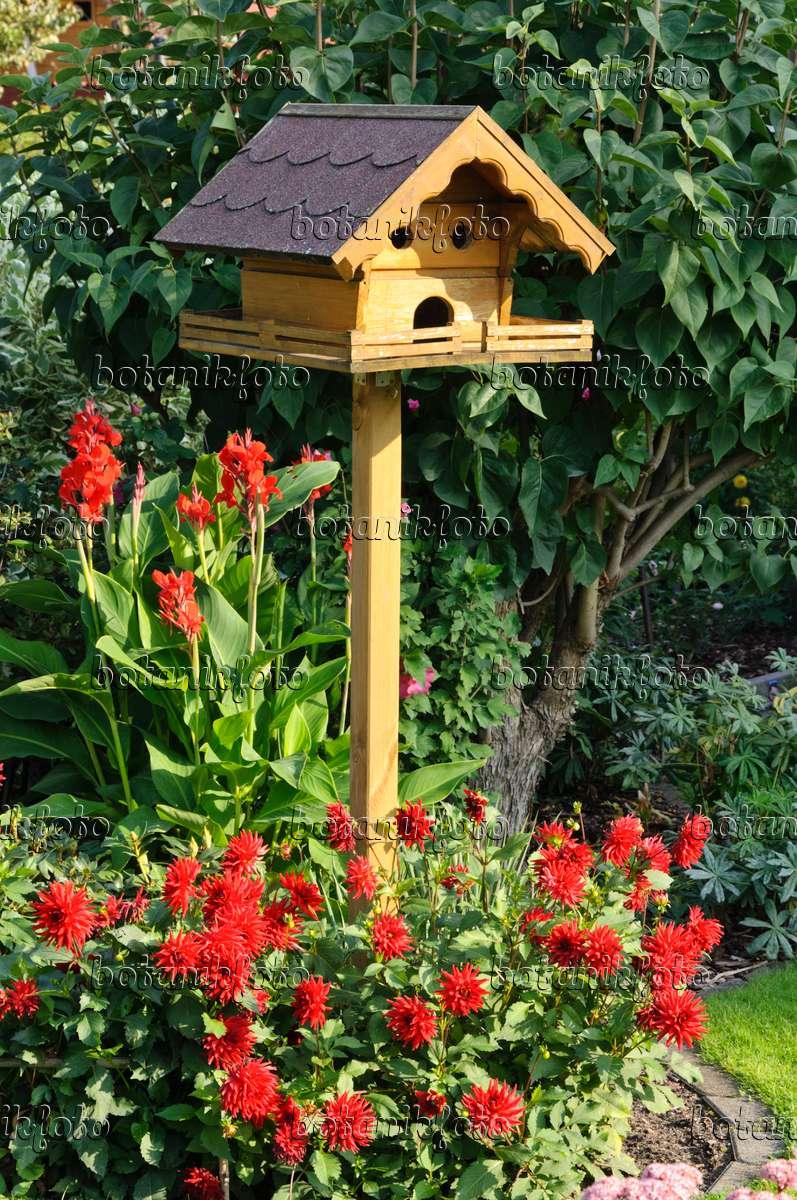 bilder canna bilder und videos von pflanzen und g rten botanikfoto. Black Bedroom Furniture Sets. Home Design Ideas