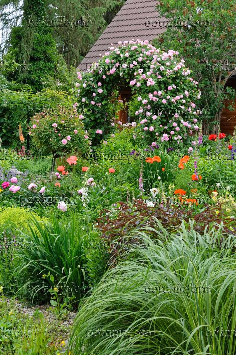bild englische rose rosa constance spry 473124 bilder und videos von pflanzen und g rten. Black Bedroom Furniture Sets. Home Design Ideas