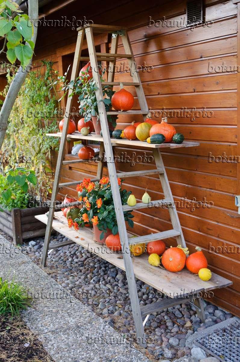bilder hokkaido k rbis bilder und videos von pflanzen und g rten botanikfoto. Black Bedroom Furniture Sets. Home Design Ideas