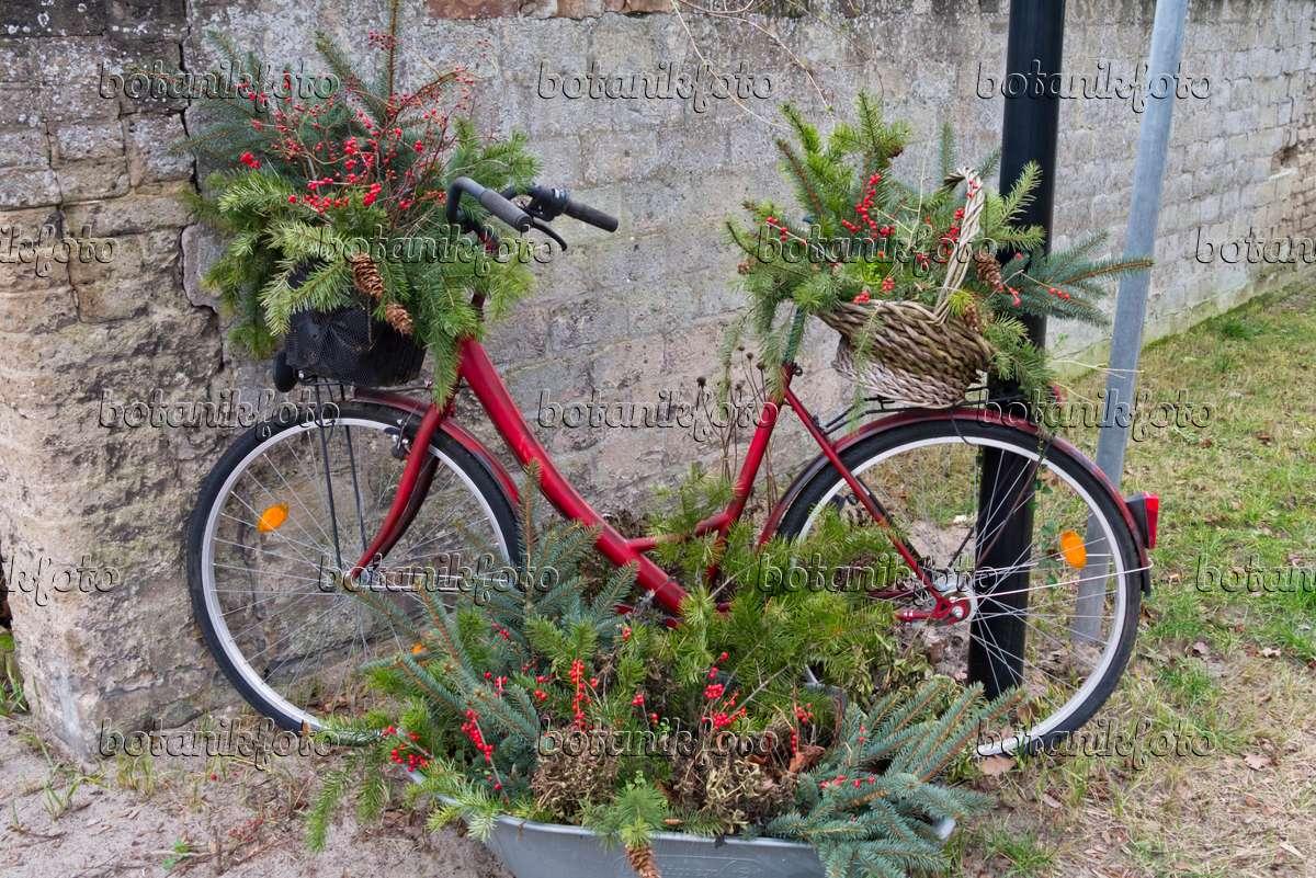 Bild fahrrad mit winterlicher dekoration 528001 bilder und videos von pflanzen und g rten - Dekoration fahrrad ...