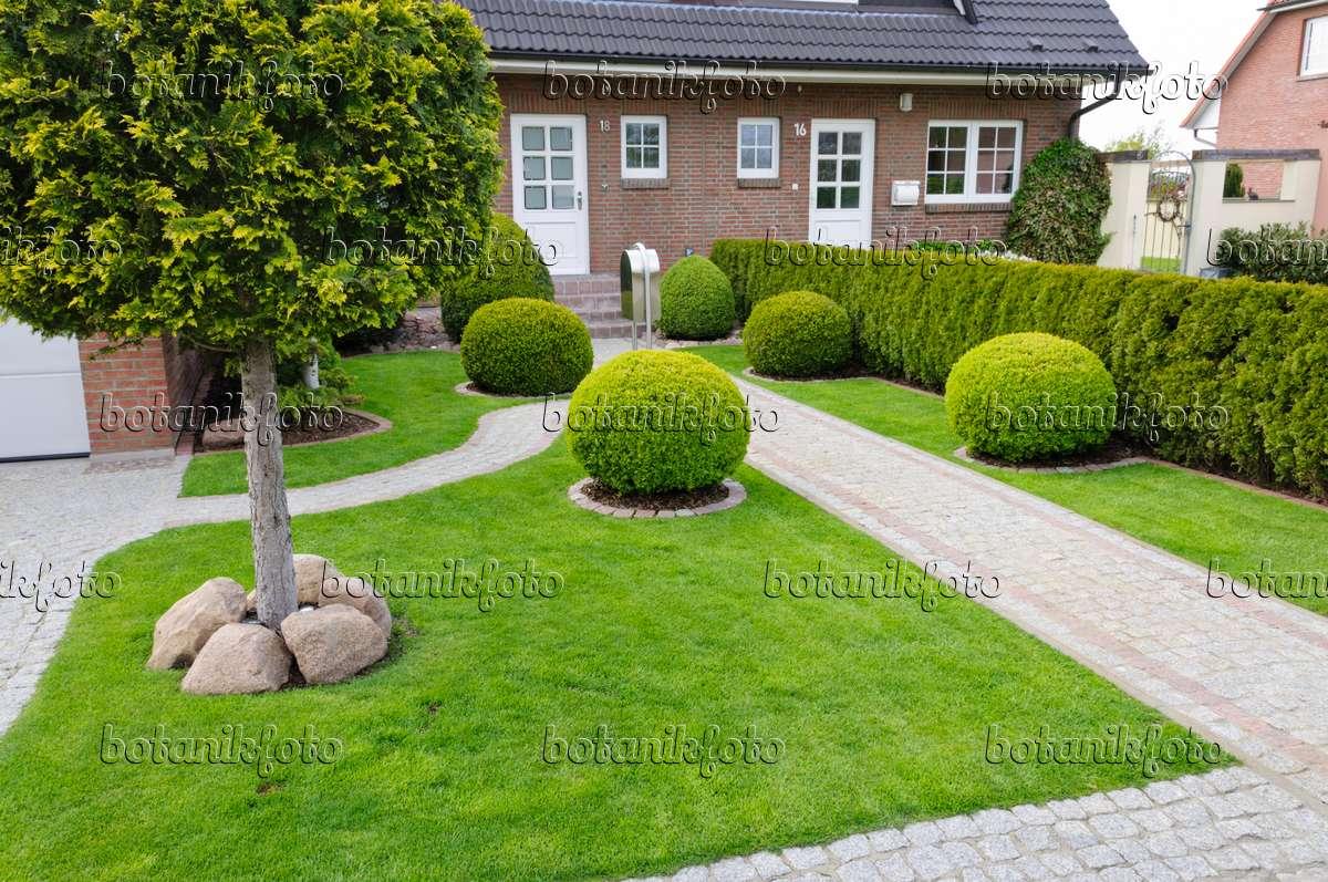 Bild formaler vorgarten mit rasenfl che und buchsbaum for Steine im vorgarten