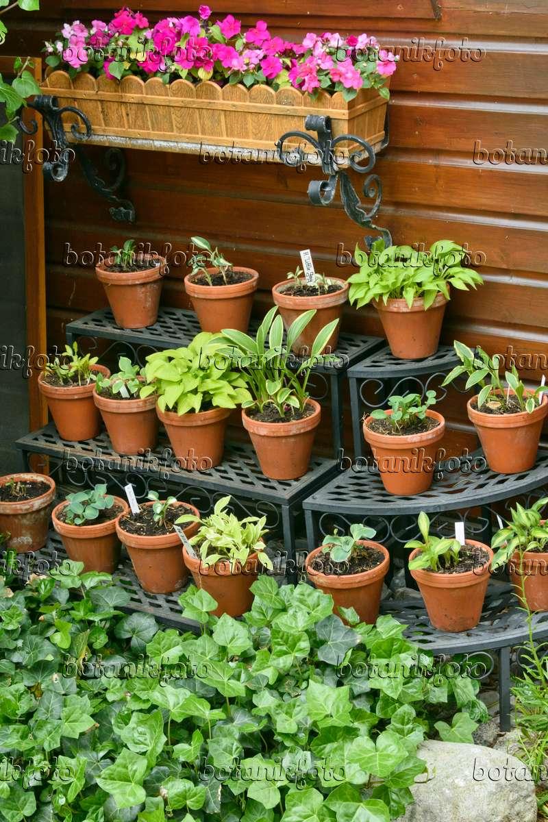 bilder t pfe und k bel 6 bilder und videos von pflanzen und g rten botanikfoto. Black Bedroom Furniture Sets. Home Design Ideas