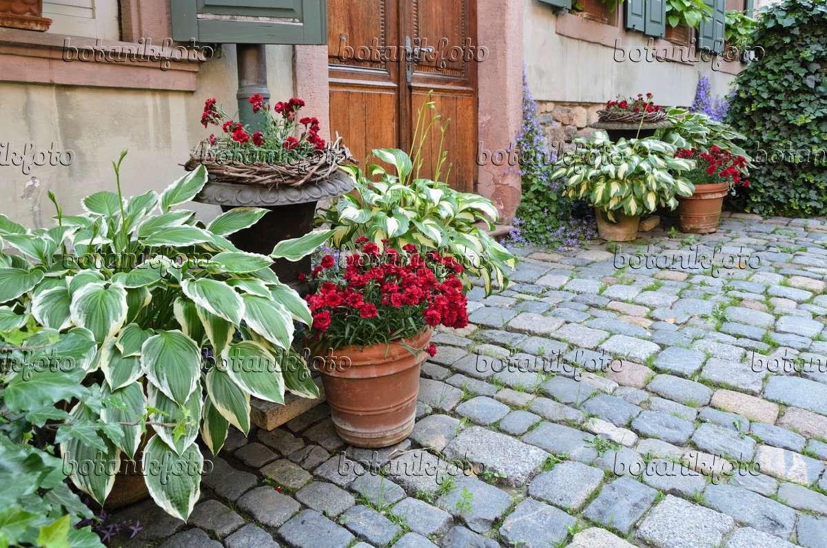 bilder t pfe und k bel 9 bilder und videos von pflanzen und g rten botanikfoto. Black Bedroom Furniture Sets. Home Design Ideas