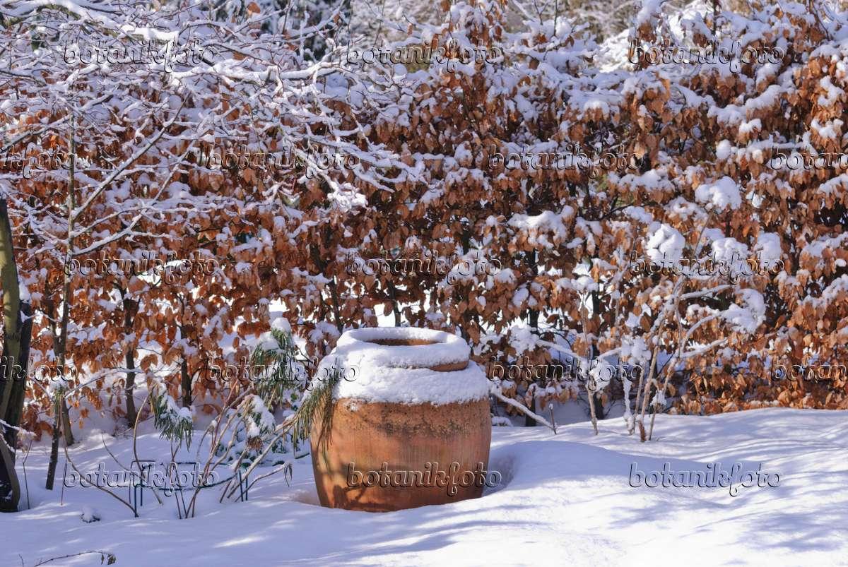 Garten Im Winter bild garten im winter 488152 bilder und pflanzen und
