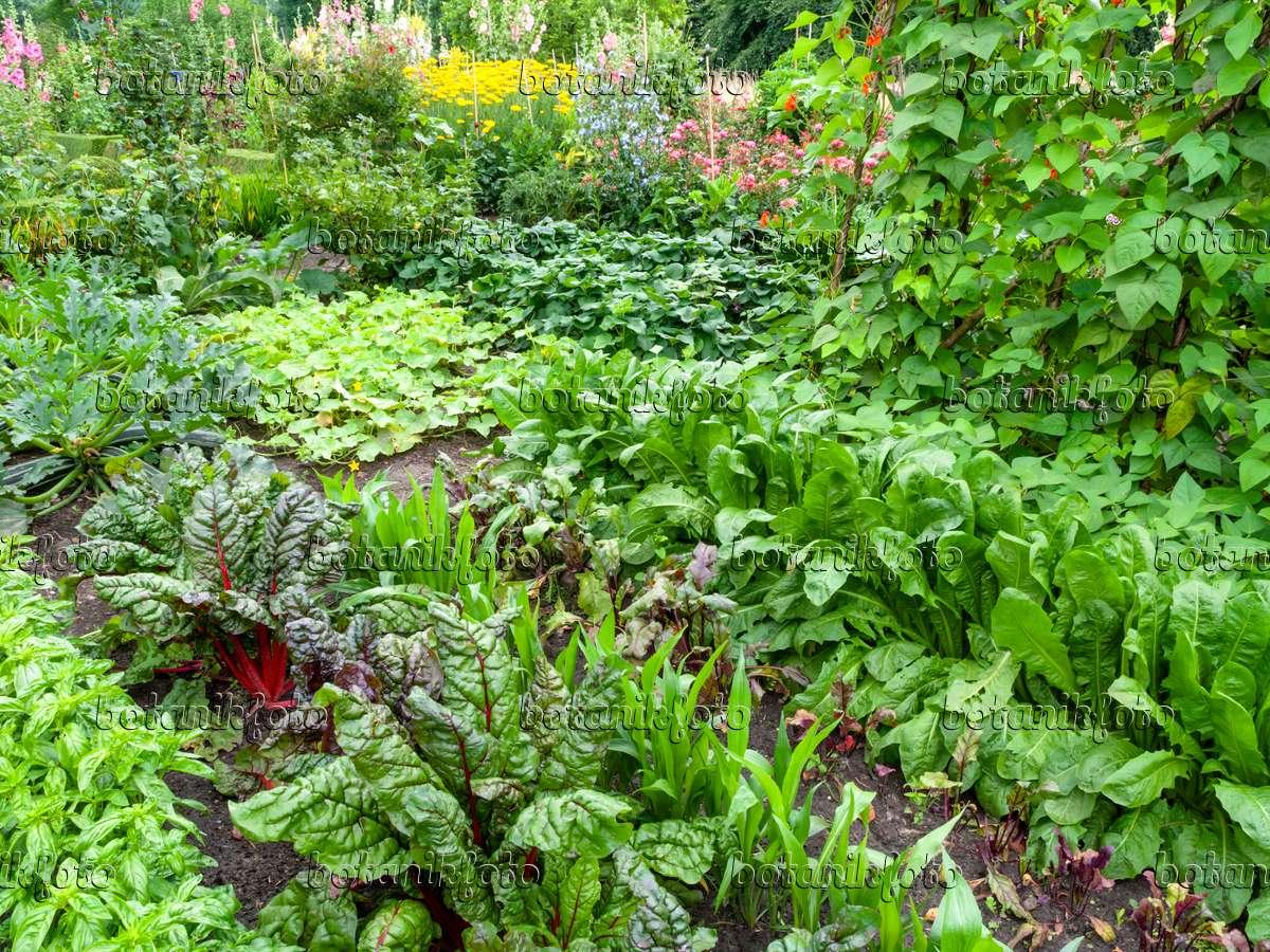 Bild gem segarten 462145 bilder und videos von for Wo pflanzen bestellen