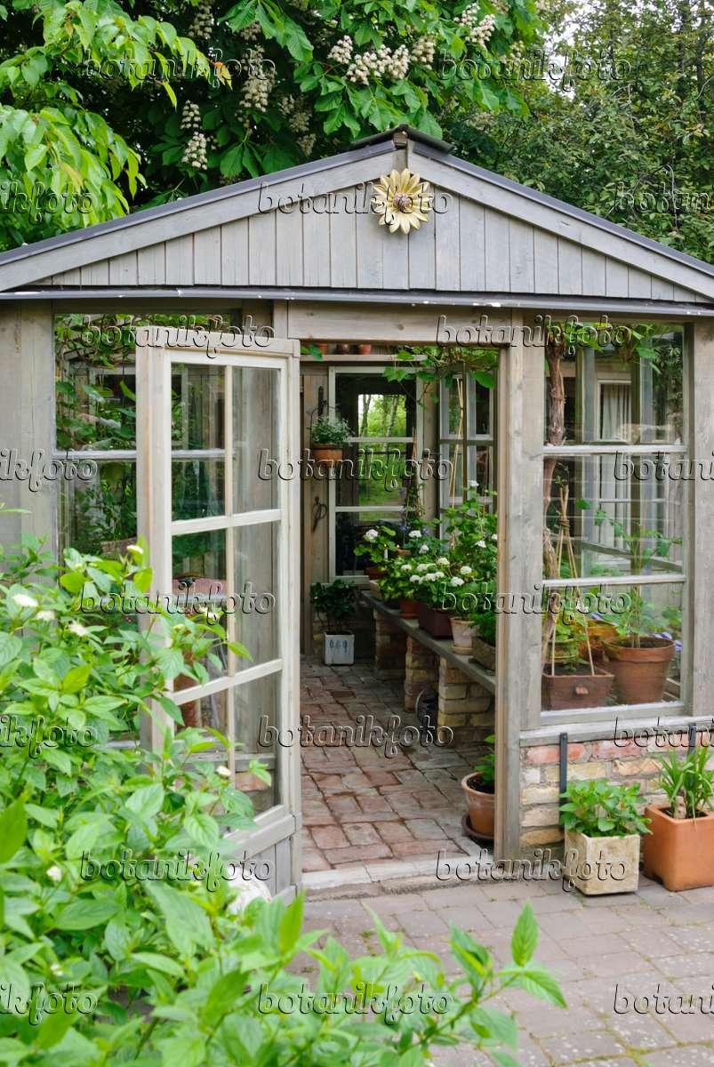 bilder gew chsh user bilder und videos von pflanzen und g rten botanikfoto. Black Bedroom Furniture Sets. Home Design Ideas