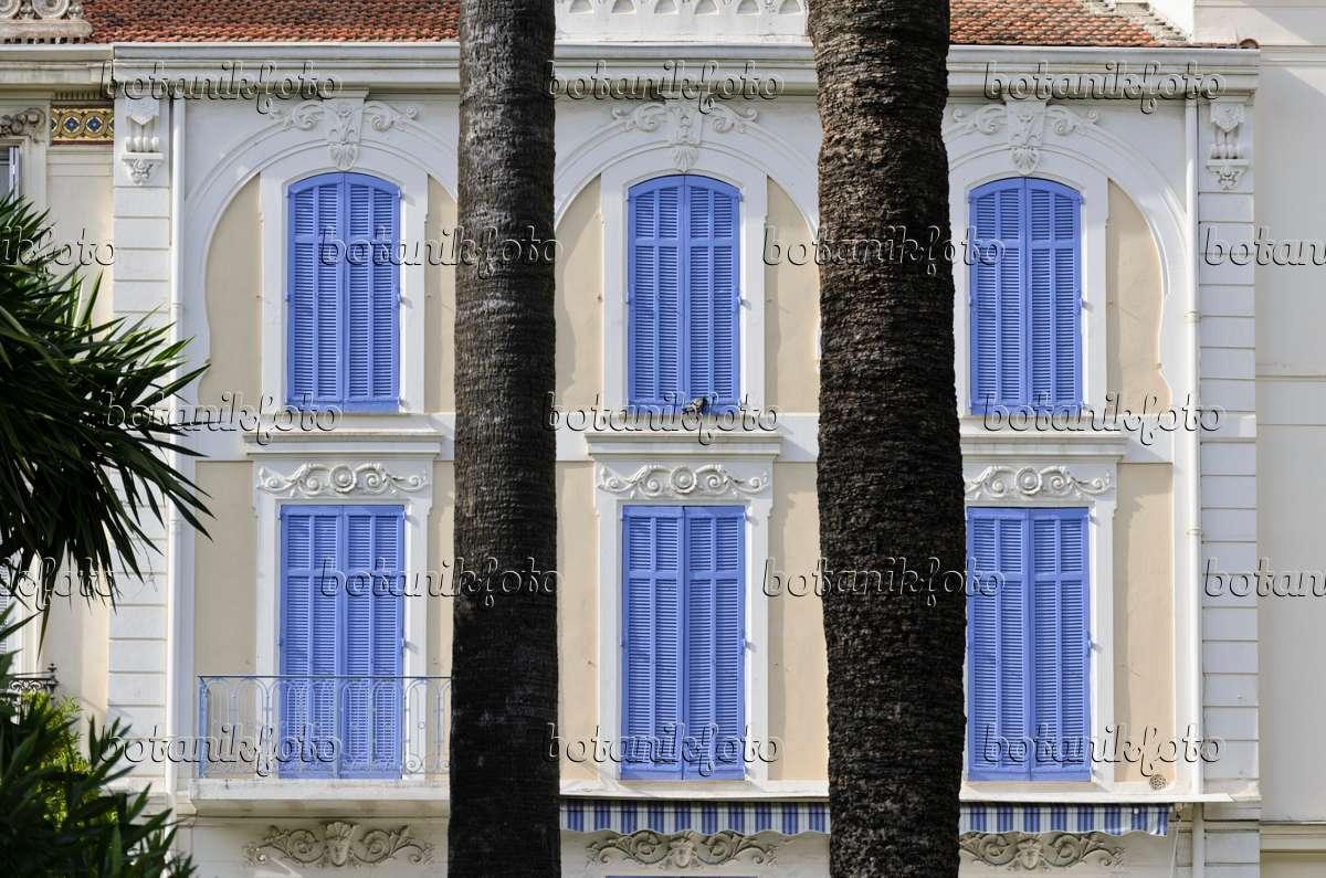 bild haus mit blauen fensterl den cannes frankreich 569008 bilder und videos von pflanzen. Black Bedroom Furniture Sets. Home Design Ideas