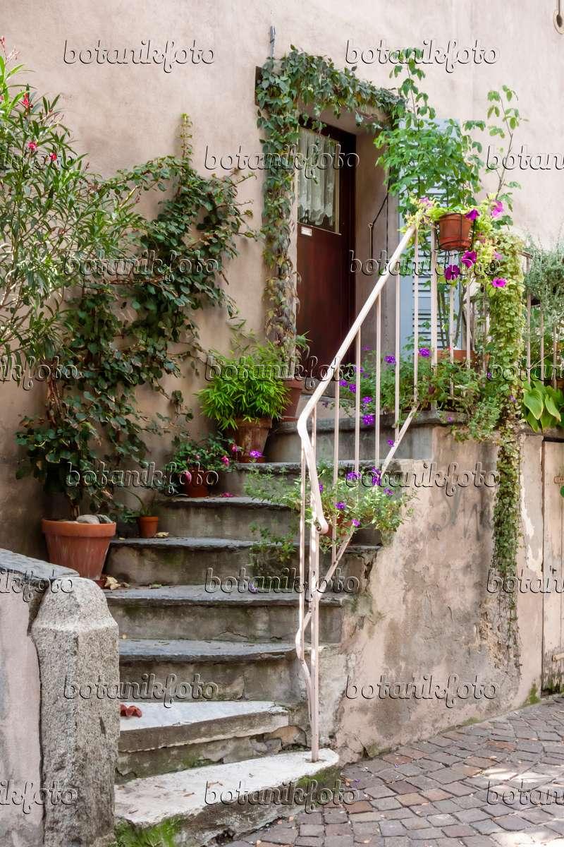 Bild hauseingang mit k belpflanzen 453110 bilder und for Garteneingang gestalten