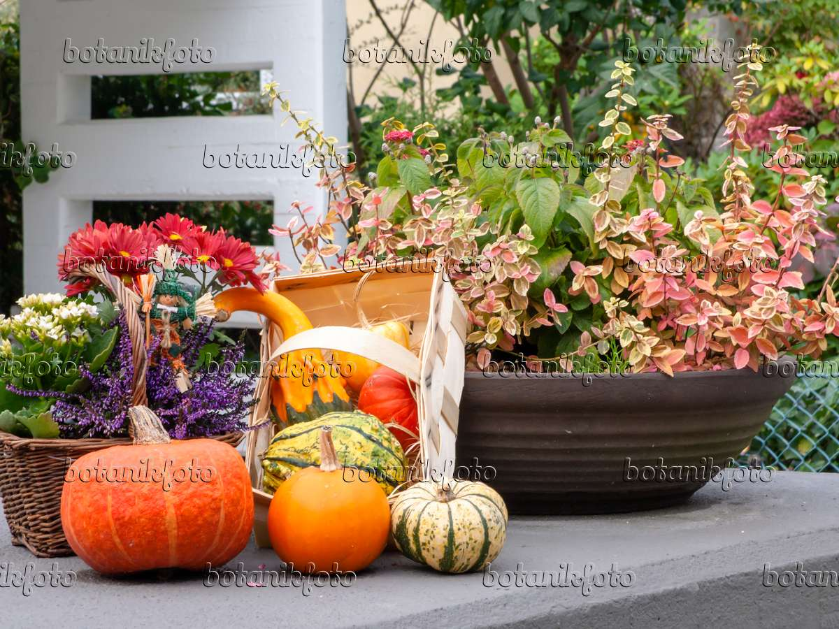 bild herbstliche dekoration 477134 bilder und videos von pflanzen und g rten botanikfoto. Black Bedroom Furniture Sets. Home Design Ideas