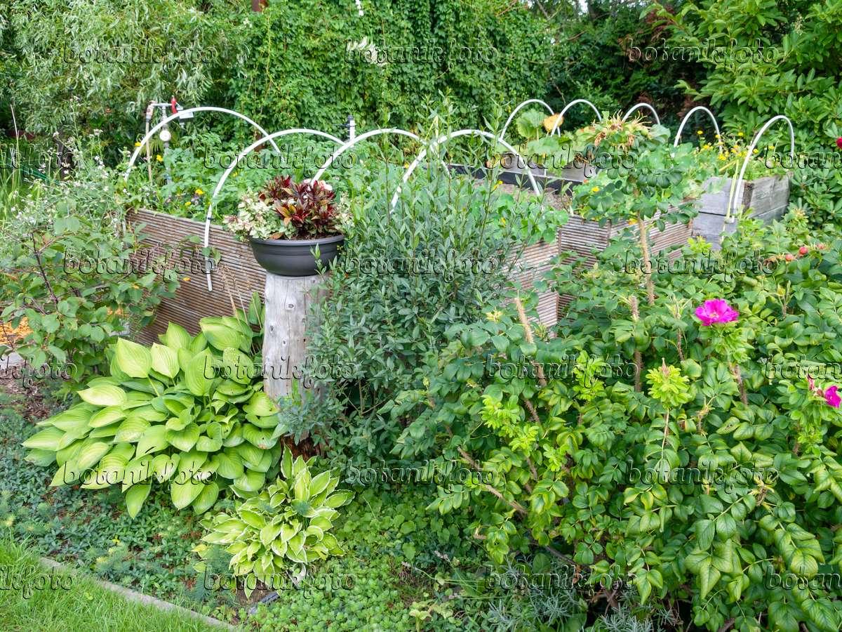 Bild Hochbeete Mit Nutzpflanzen Blumen Und Aufgesteckten