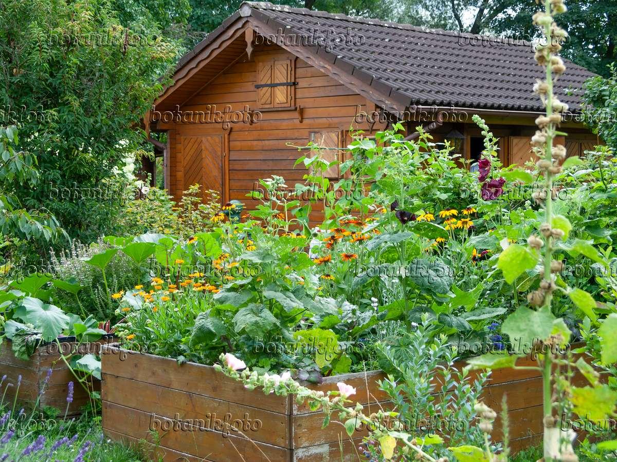 Bild Hochbeete Mit Nutzpflanzen Und Blumen Vor Einer Gartenlaube In