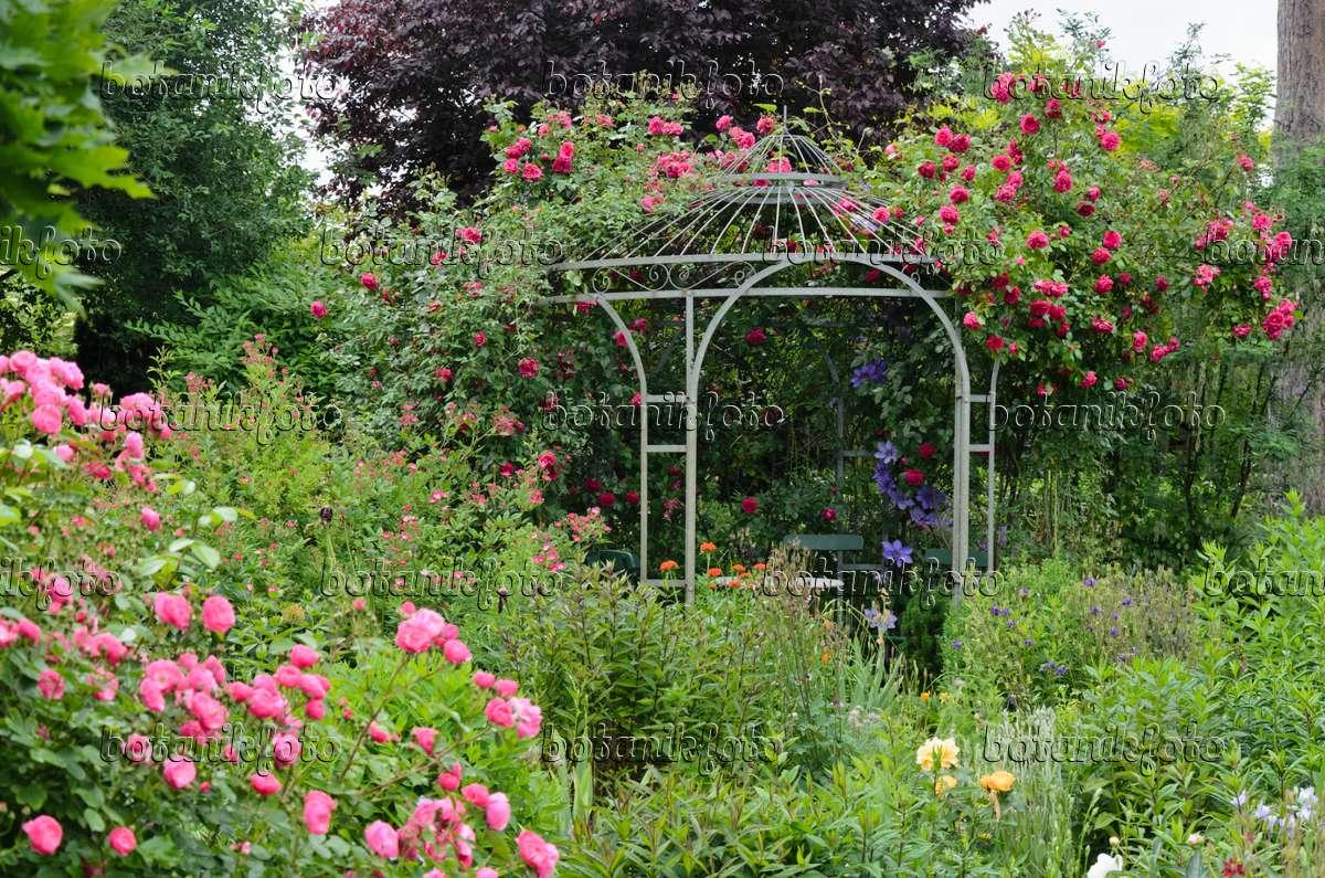 bild kletterrose rosa laguna an einem gartenpavillon. Black Bedroom Furniture Sets. Home Design Ideas