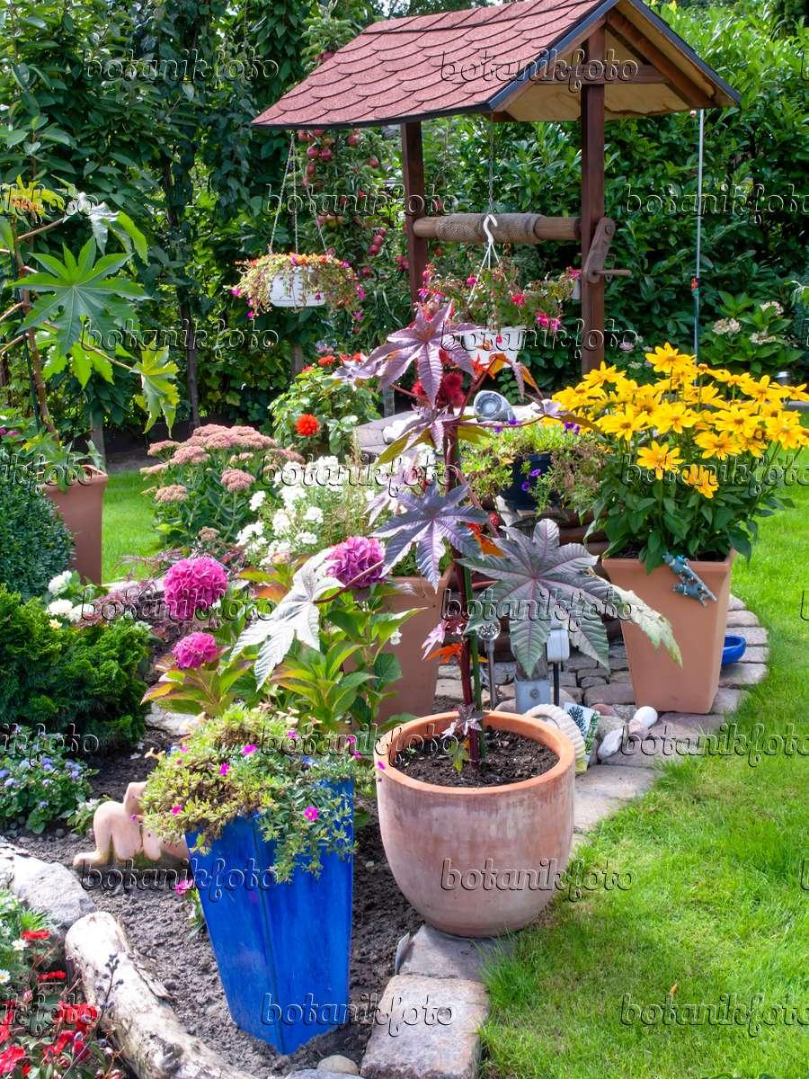 bild k belpflanzen in einem garten 490008 bilder und videos von pflanzen und g rten. Black Bedroom Furniture Sets. Home Design Ideas