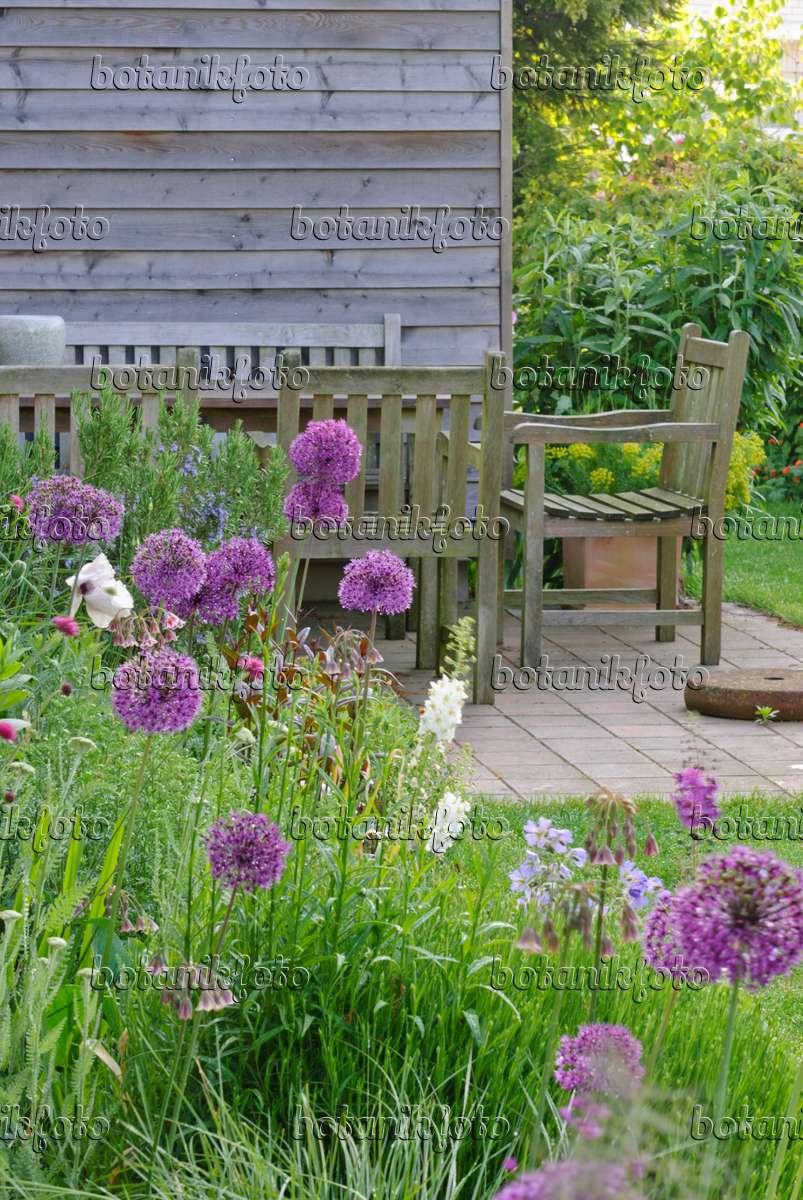 bild lauch allium aflatunense 39 purple sensation 39 mit terrasse und sitzplatz im hintergrund. Black Bedroom Furniture Sets. Home Design Ideas