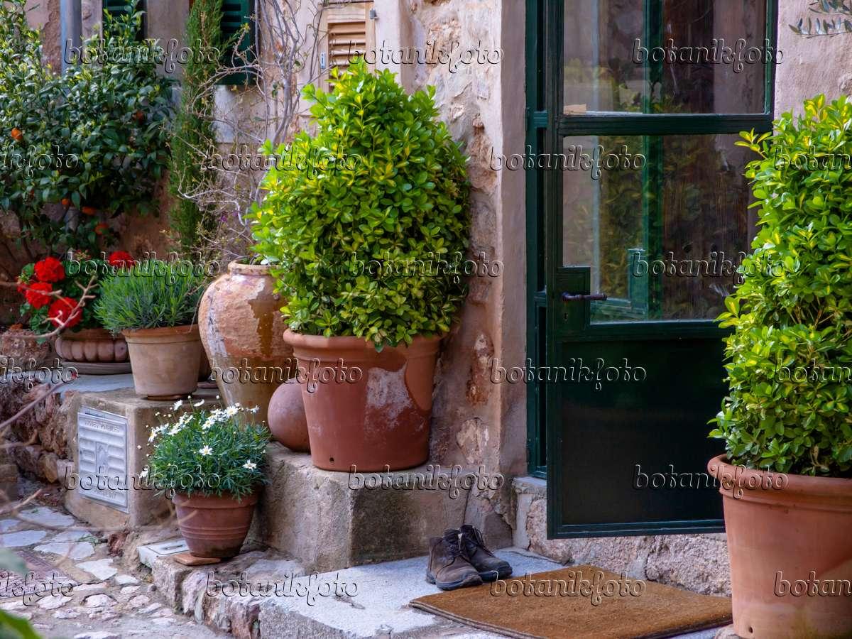 bild mediterraner hauseingang mit blumenk beln 424088 bilder und videos von pflanzen und. Black Bedroom Furniture Sets. Home Design Ideas