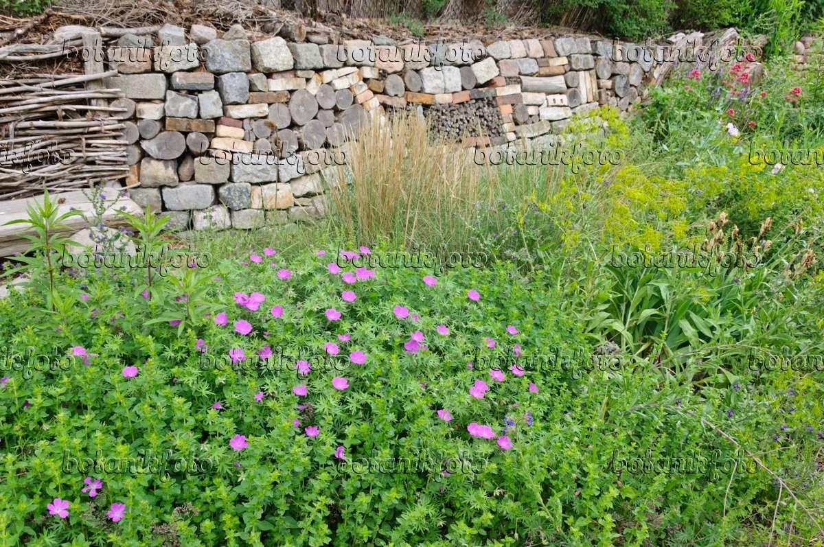 bild naturnaher staudengarten mit trockensteinmauer 472417 bilder und videos von pflanzen. Black Bedroom Furniture Sets. Home Design Ideas