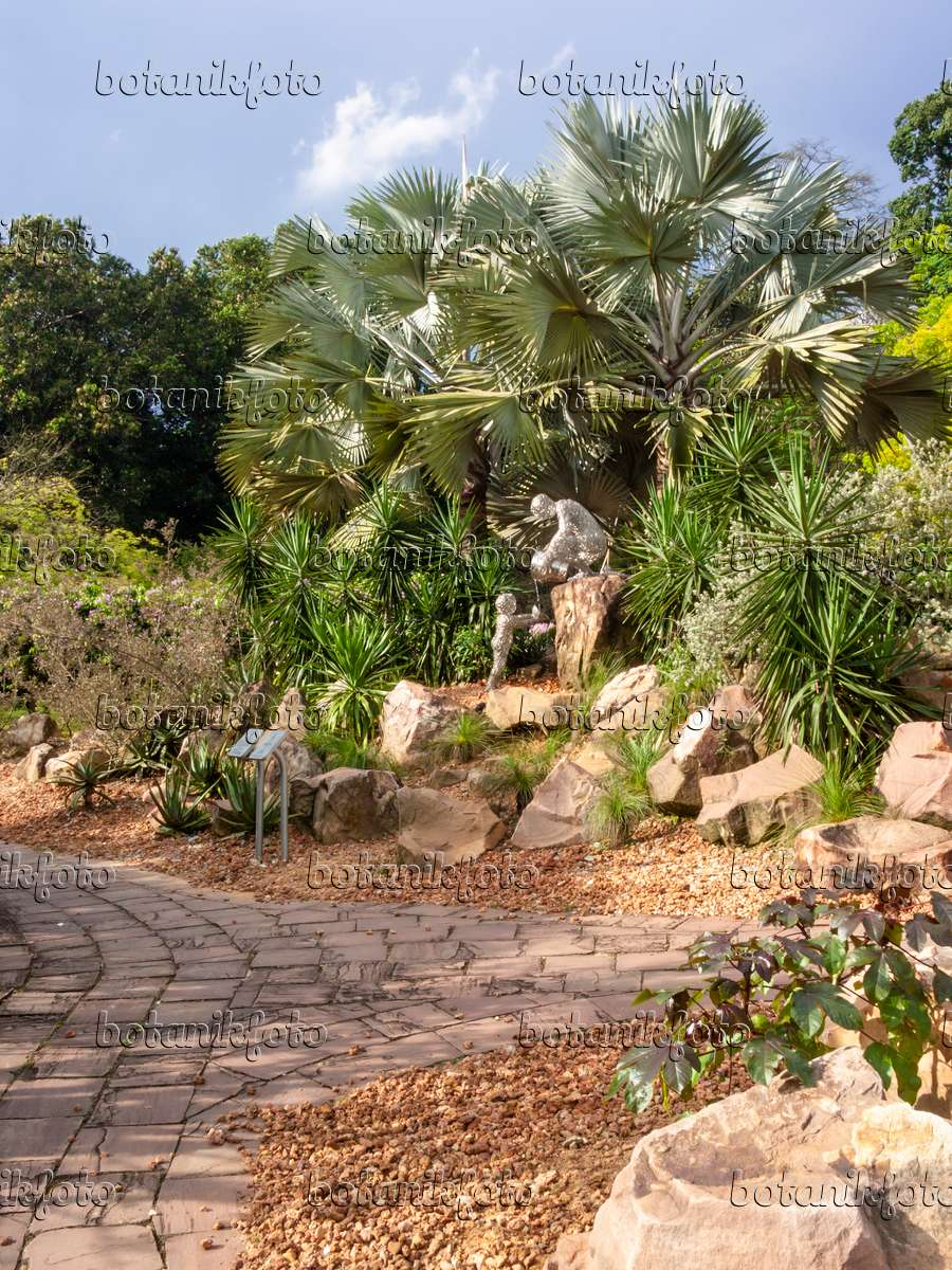 bilder skulpturen 3 bilder und videos von pflanzen und g rten botanikfoto. Black Bedroom Furniture Sets. Home Design Ideas