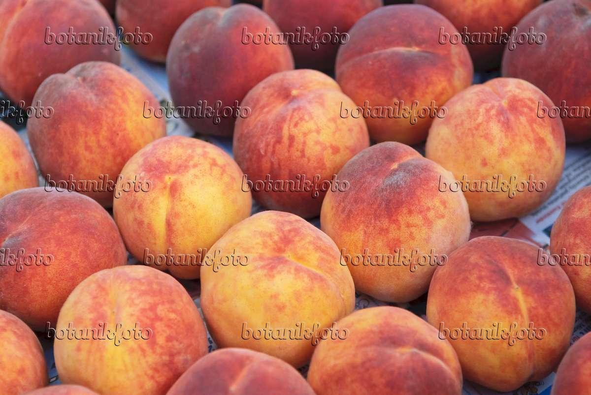 bild pfirsich prunus persica 39 red haven 39 517357 bilder und videos von pflanzen und g rten. Black Bedroom Furniture Sets. Home Design Ideas