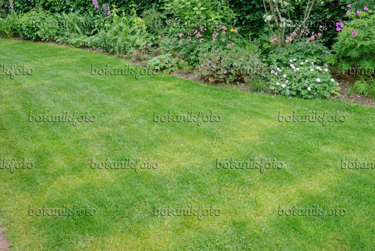 Bild Rasen mit gelben Streifen durch ungleichmäßig verteilten Dünger ...