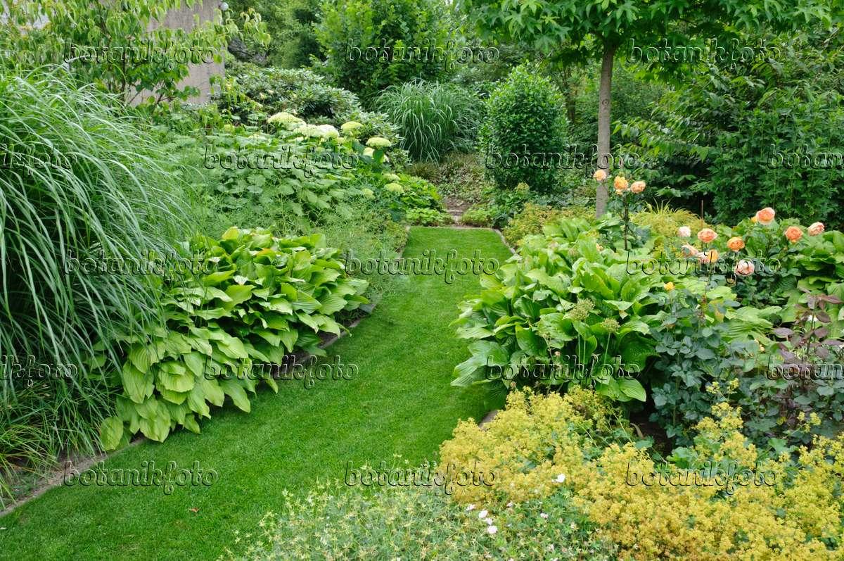 bild rasenweg in einem staudengarten 474059 bilder und videos von pflanzen und g rten. Black Bedroom Furniture Sets. Home Design Ideas