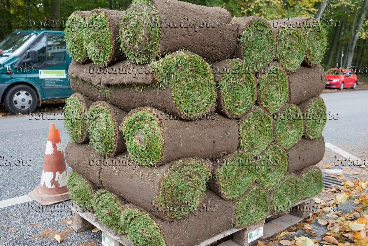 bild rollrasen 548127 bilder und videos von pflanzen und g rten botanikfoto. Black Bedroom Furniture Sets. Home Design Ideas