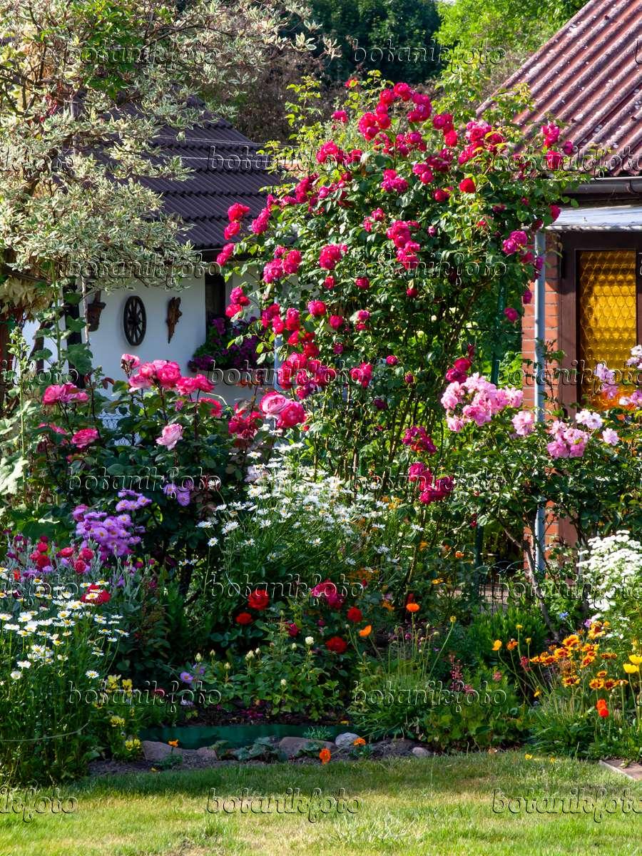 bild rosen und staudenbeet in einem kleingarten 461081. Black Bedroom Furniture Sets. Home Design Ideas