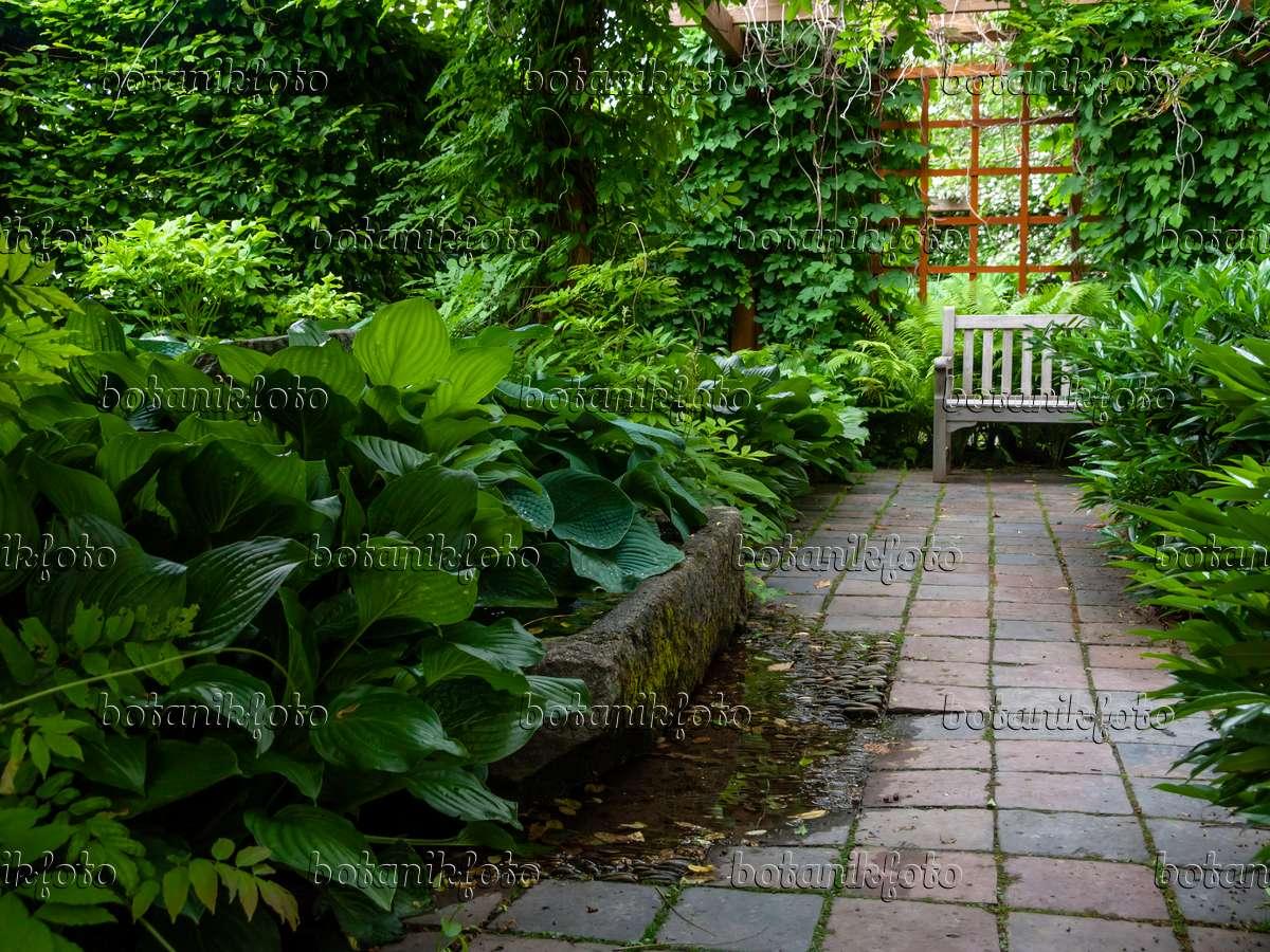 Bild schattiger garten 426168 bilder und videos von for Gartengestaltung schattiger garten