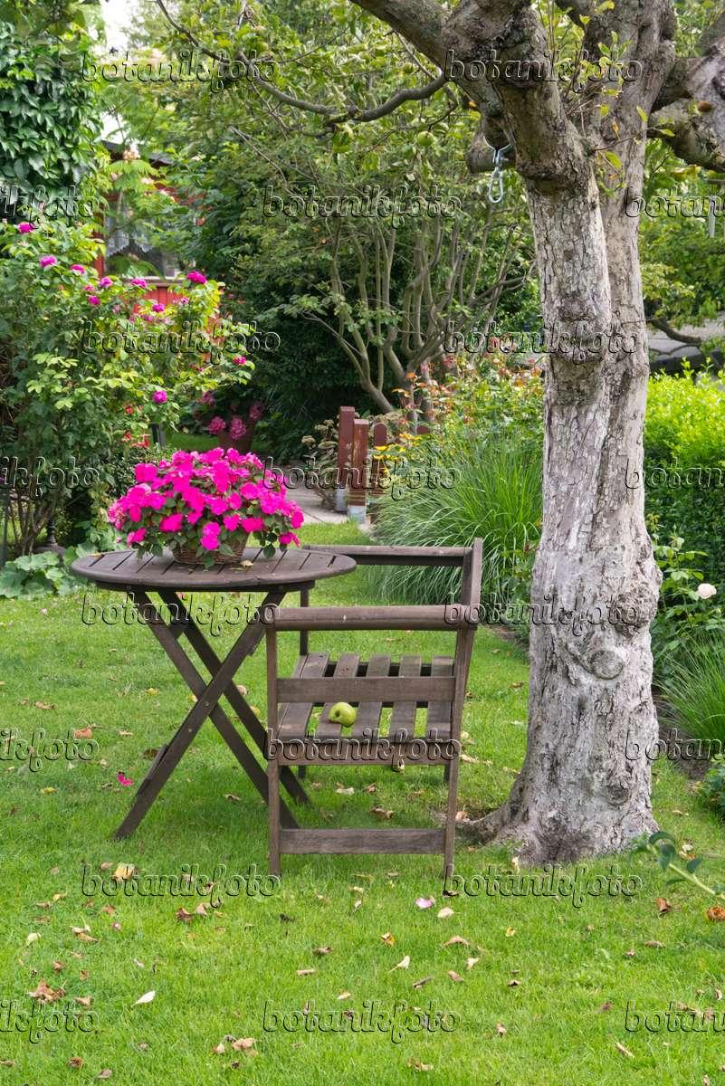 bilder flei iges lieschen bilder und videos von pflanzen und g rten botanikfoto. Black Bedroom Furniture Sets. Home Design Ideas