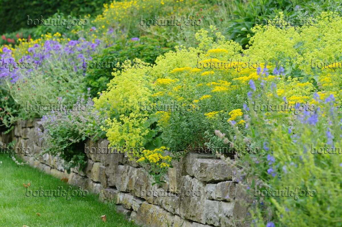 bild staudengarten mit trockensteinmauer 485117 bilder und videos von pflanzen und g rten. Black Bedroom Furniture Sets. Home Design Ideas