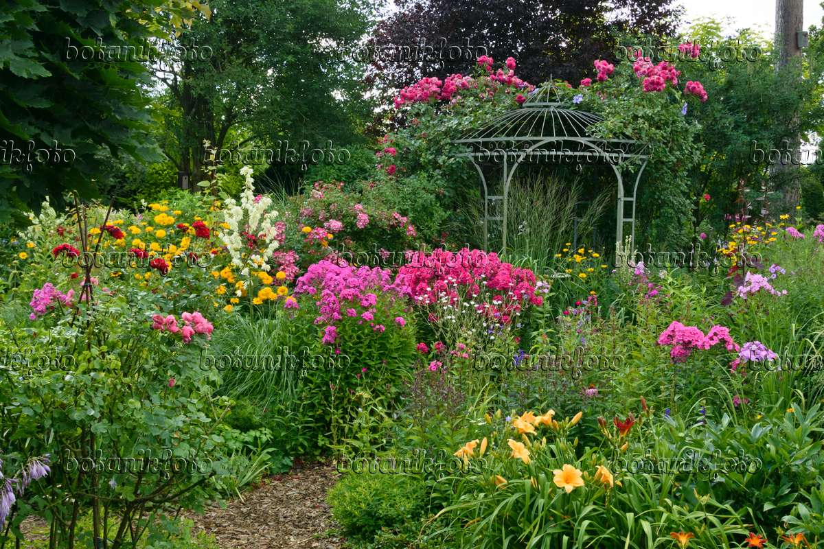 Bild Staudenphlox (phlox Paniculata), Rosen (rosa) Und Taglilien ... Garten Pavillon Tropische Pflanzen