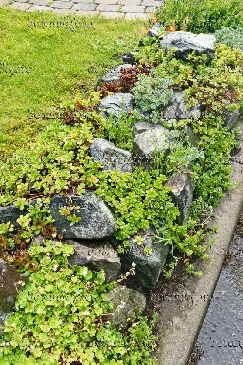 bild steingarten mit sukkulenten 556049 bilder und videos von pflanzen und g rten botanikfoto. Black Bedroom Furniture Sets. Home Design Ideas