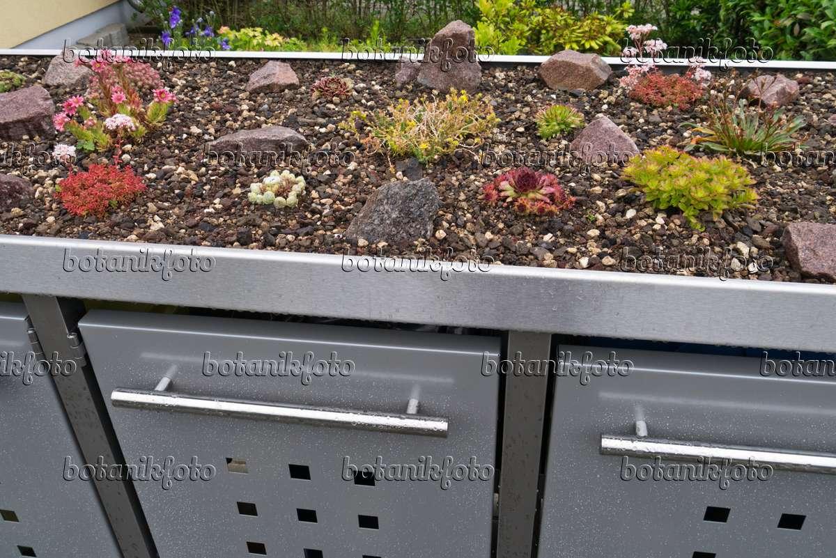 bild sukkulenten auf einer m lltonnenbox aus metall 534265 bilder und videos von pflanzen. Black Bedroom Furniture Sets. Home Design Ideas