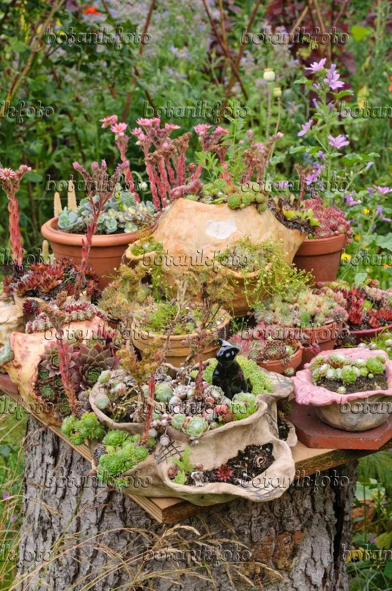 bild topfgarten mit sukkulenten 474116 bilder und videos von pflanzen und g rten botanikfoto. Black Bedroom Furniture Sets. Home Design Ideas