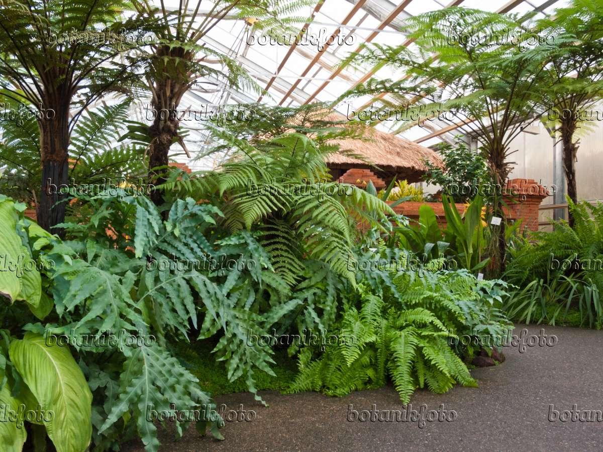 Bild Tropische Pflanzen mit roter Mauer und strohbedeckter Hütte ...