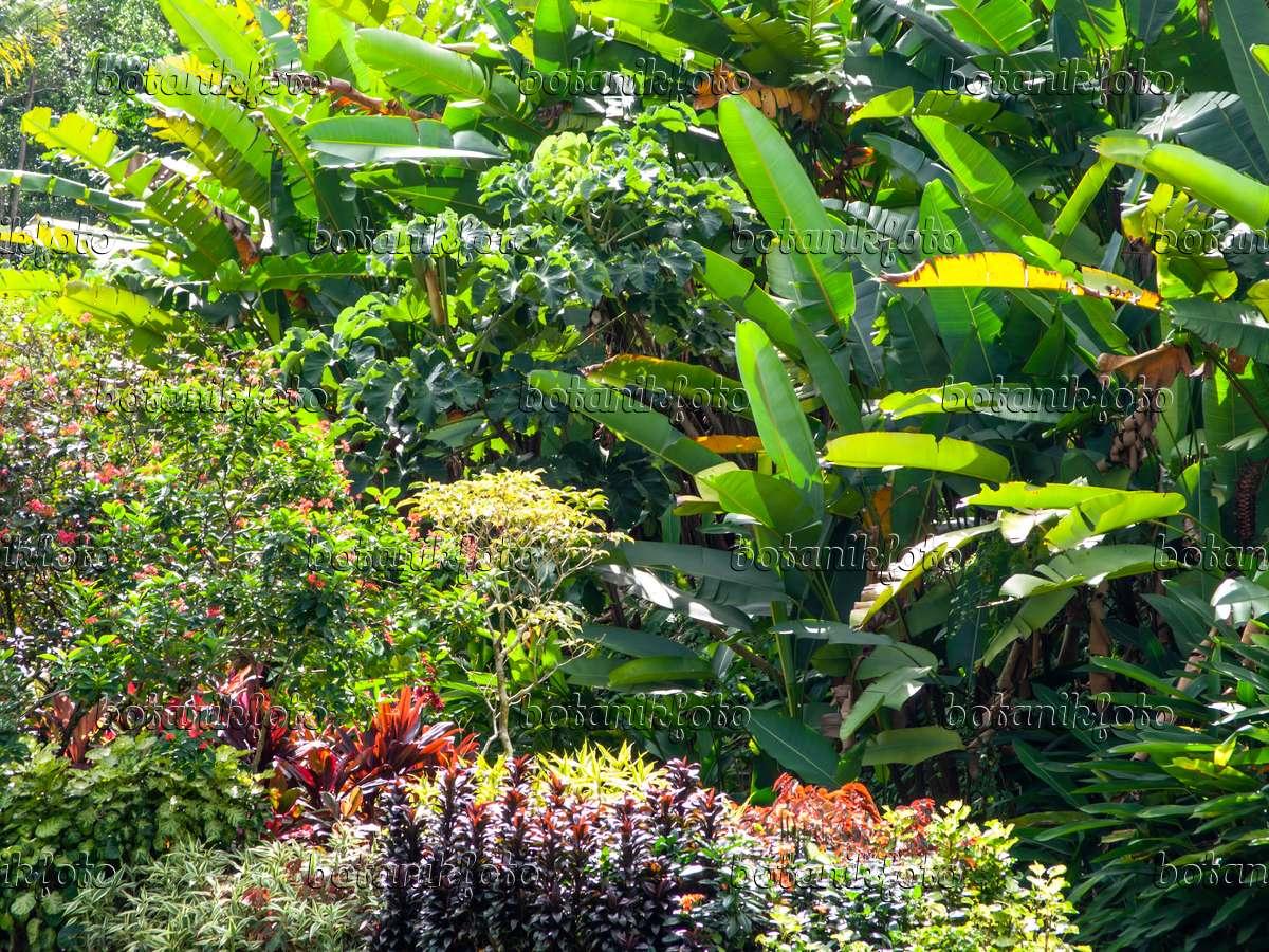 bild tropischer garten - 434111 - bilder und videos von pflanzen, Hause und garten