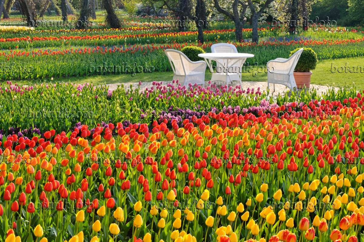 Bild tulipan britzer garten berlin deutschland 471210 for Pflanzen bestellen berlin